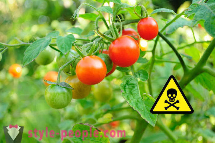 This is harmful to eat tomatoes?