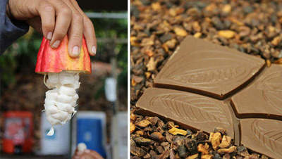 The process of growing and producing chocolate