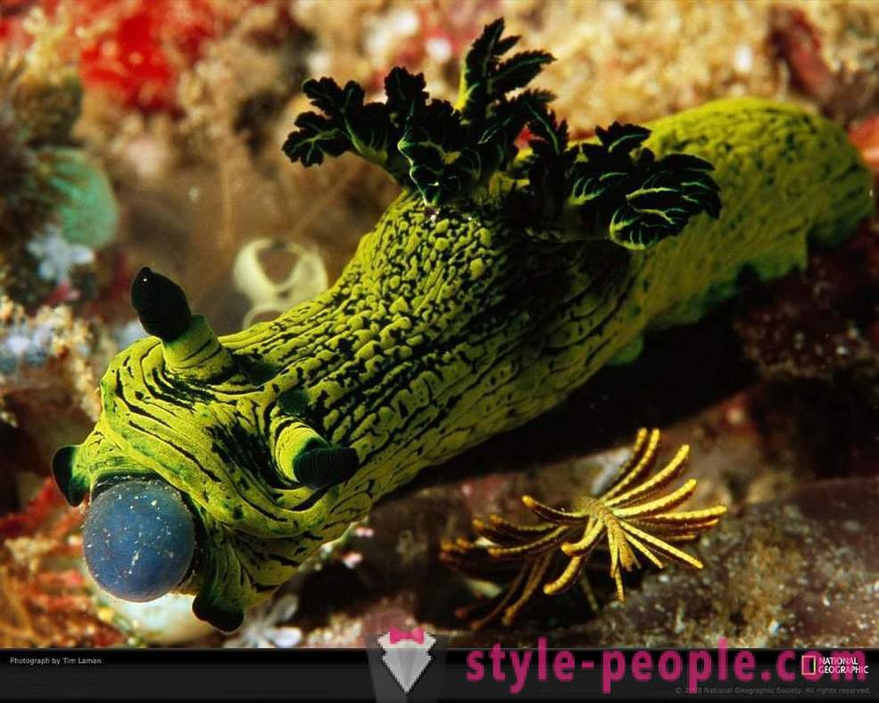 Amazing inhabitants of the underwater world in pictures