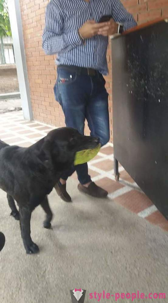 The dog has learned to buy food for its own currency