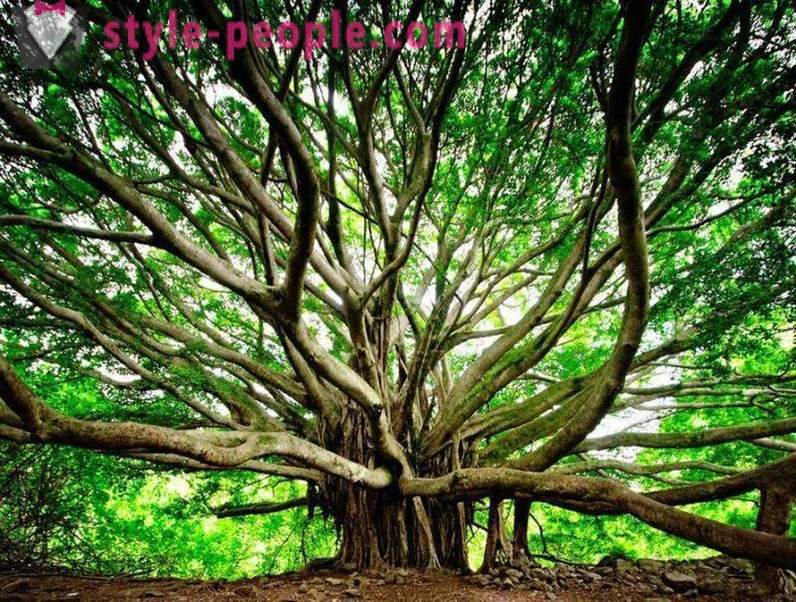 The amazing beauty of trees from around the world