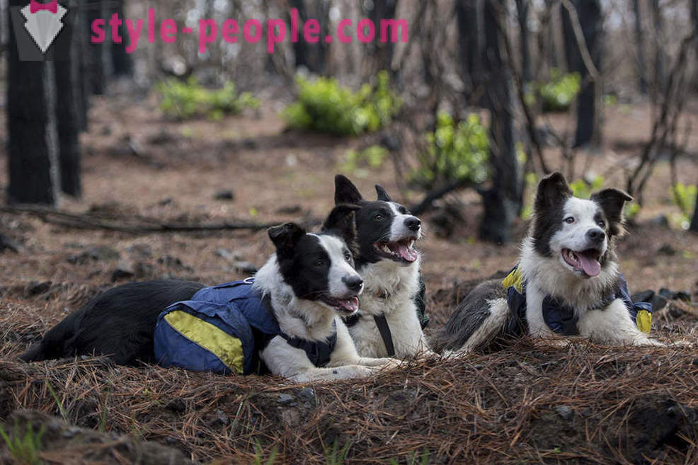 Dogs help restore the Chilean forests