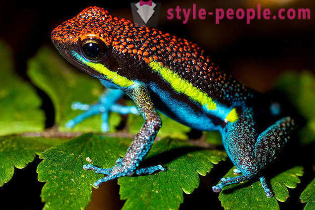 10 amazing animals rainforest