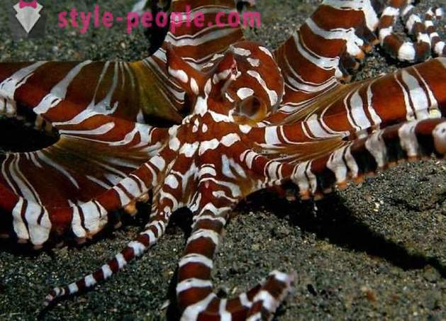 10 sea creatures, similar to the aliens