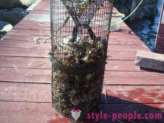 When catching crayfish on rakolovku? When it is better to catch crayfish hands? When you can catch crayfish in Russia?