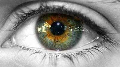 Swamp eye color. What determines the color of the human eye?