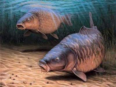 How to catch carp: recommendations fishermen