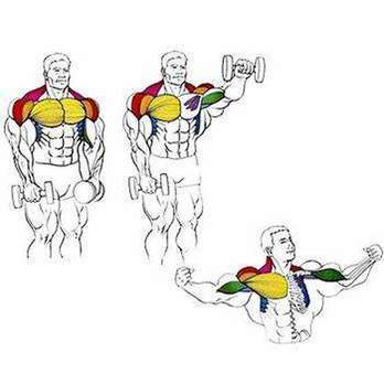 How to build chest muscles dumbbells: exercises and tips